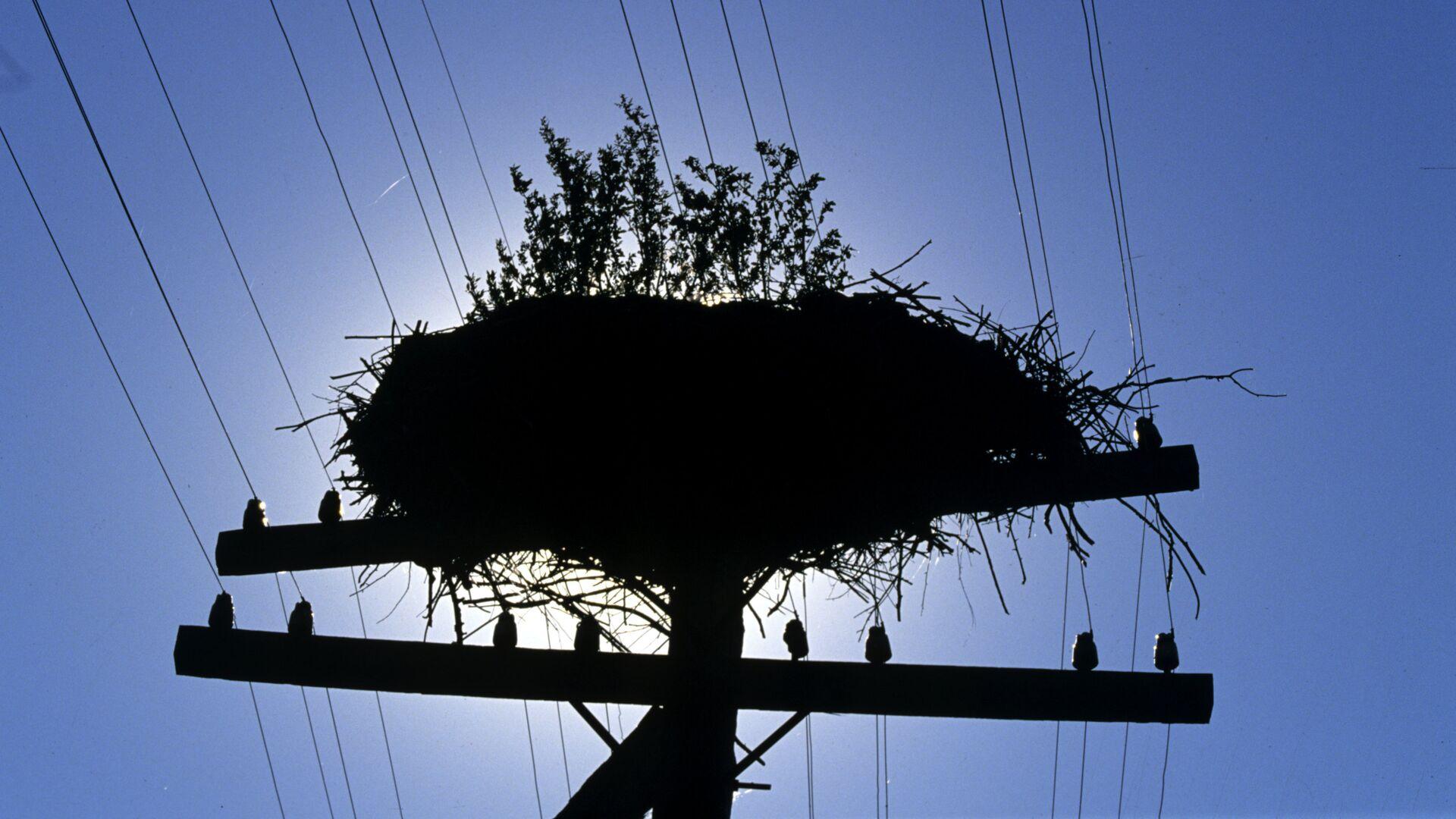 Брошенное гнездо аиста в деревне Чудяны - РИА Новости, 1920, 15.08.2017