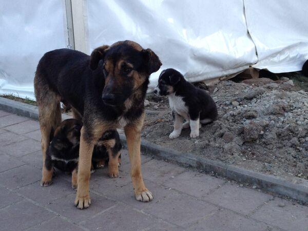 Дворовые собаки. Архивное фото